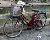 滑稽的自行车 库存照片