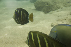 2869 rafa koralowa Obrazy Royalty Free