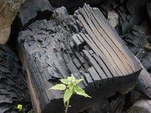 烧焦的采煤 免版税库存图片