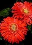 29 blommor Arkivfoto