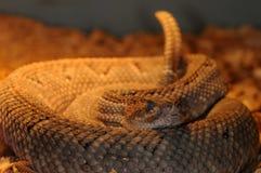 29 wąż Fotografia Stock