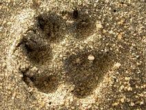 狗打印沙子 免版税库存照片