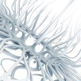 2d amoeba Royaltyfria Foton