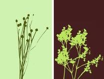 2flowers例证 免版税库存照片