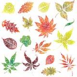 2片秋天grunge叶子设置了感恩 库存照片