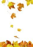 2s2秋天构成叶子 免版税库存图片
