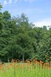 3个公园夏天 库存照片