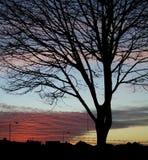 3个剪影日落结构树 库存照片
