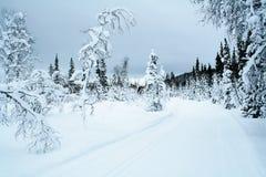 3个国家(地区)交叉滑雪线索 免版税库存图片