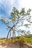 3个妖怪结构树 库存照片