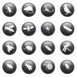 3个按钮虫啮齿目动物 免版税图库摄影