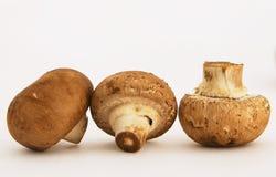 3个栗子蘑菇 库存图片