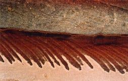 3个模式petra岩石 库存图片