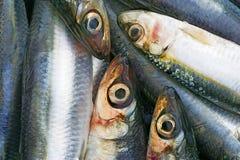 3个沙丁鱼 库存照片