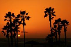 3个海滩日落 库存图片
