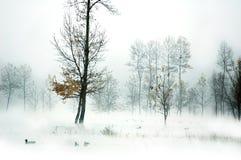 3个湖思慕 免版税图库摄影