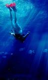 3个潜水的鲨鱼 免版税图库摄影