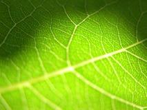 3个特写镜头绿色叶子 免版税库存照片