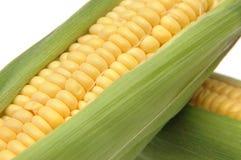 3个玉米棒玉米 免版税库存照片