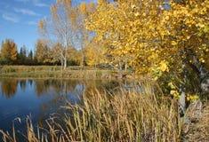 3个秋天池塘 库存图片