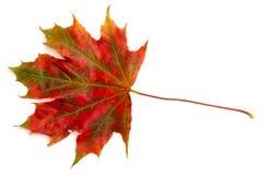 3个秋天颜色 免版税库存图片