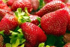 3个草莓卷 库存图片
