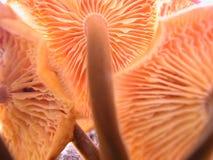 3个蘑菇 免版税库存图片