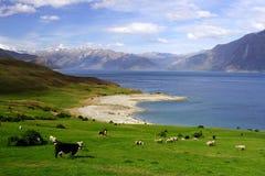 3乡下生活新西兰 免版税库存图片