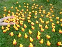 3只小鸡疯狂的塑料 免版税库存图片