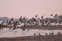 3只海鸥 免版税库存照片