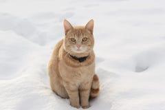 3只猫红色 库存图片