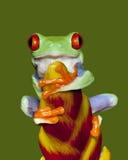 3只眼睛青蛙红色结构树 库存照片
