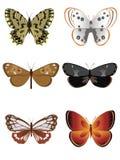 3只蝴蝶收集 免版税库存图片