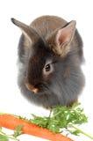 3吃狮子兔子时间 免版税库存照片