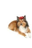3圣诞节狗礼品 库存照片
