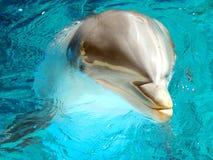 3宽吻海豚 库存照片