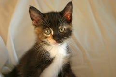 3小猫 免版税库存照片