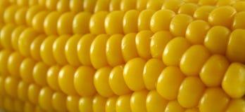 3新鲜的玉米 库存图片