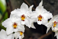 3朵兰花 库存照片