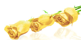 3朵玫瑰 免版税库存图片