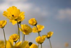 3朵美丽的花通配黄色 库存图片