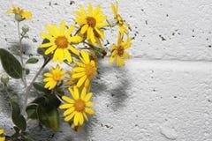 3朵花墙壁 图库摄影