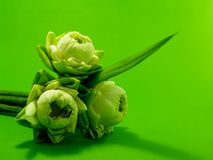 3朵花莲花 库存照片
