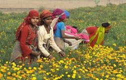 3朵花采摘 免版税库存图片
