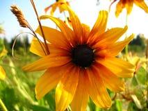 3朵花黄色 免版税库存照片