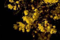 3朵花黄色 免版税图库摄影