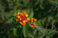 3朵花 库存图片