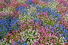 3朵颜色花自然模式 免版税库存图片