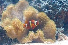 3条异乎寻常的鱼 免版税库存图片