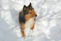 3条狗雪 库存照片